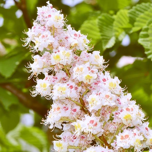 Bachblüten-Beratung